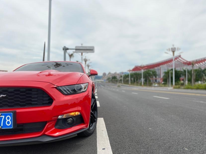福特 Mustang  2015款 2.3T 50周年纪念版图片